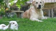 Вот такие друзья — кролик и собака!