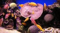 Морские обитатели в аквариумах — буйство красок и форм!