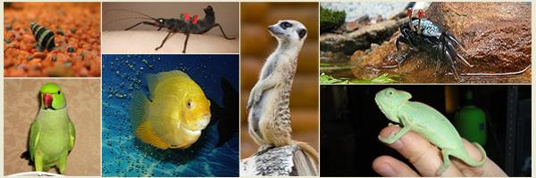 животный мир на акватропике