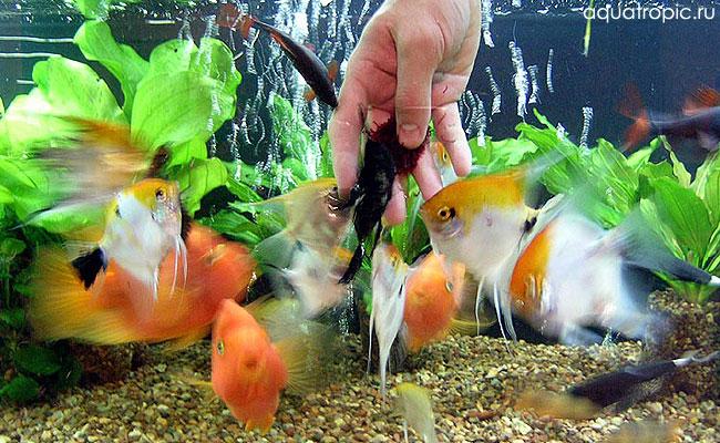 кормление рыб с рук