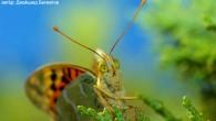 Обычно, когда мы говорим о бабочках, то сразу же представляем их красочный наряд. А как вам вот такой ракурс? Посмотрите, какой выразительный взгляд у […]
