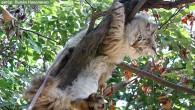 Собаки всегда завидовали кошкам: они могут забраться на дерево и с высоты птичьего полета обозревать окружающее пространство. Кошки всегда завидовали собакам: они не могут […]