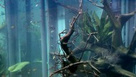 Оформление аквариума чем-то сродни рисованию картины — изящный мазок, казалось бы, совсем неприметный, кардинально меняет образ, удивительно преображая его восприятие. Так и в аквариумном […]