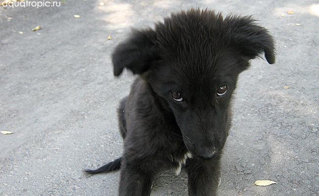 собака по кличке Антеннка