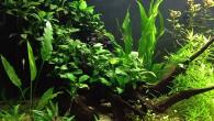 Аквариумы бывают разными, но самыми эффектными, несомненно, являются подводные сады. Один из таких садов представлен на фотографии. Однако, чтобы содержать такую красоту, нужно приложить […]