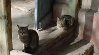 В нашем дворе всегда были кошки, разные. А как же без них?! Без кошек никак нельзя. Сидят, греются на солнце, себе под нос мурлыкая. […]