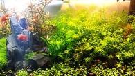 И никакого фотошопа! А ведь такая красота создана в объеме, который и аквариумом-то назвать сложно — всего лишь 25 литров! Гармонично подобранные растения, как […]