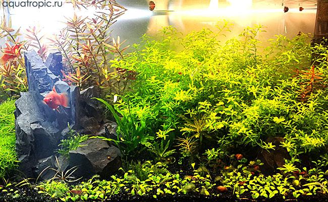 миниаквариум с живыми растениями