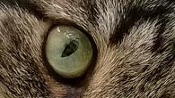 Говорят, есть такой камень — кошачий глаз. Загадочный, удивительный взгляд, и сколько в нем смысла! И мир, отраженный в кошачьем глазе, дающий нам возможность […]