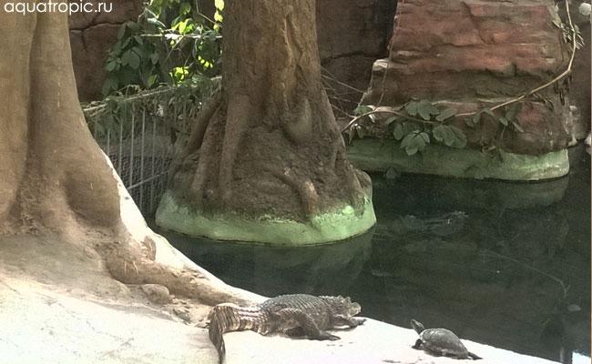 животные ташкентского зоопарка