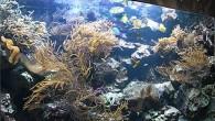 Море, море, мир бездонный. Но море вполне можно разместить в аквариуме. И тогда кусочек подводного мира, например, с далеких Кариб, будет жить в какой-нибудь […]