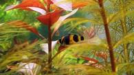Бычки пасутся не только на лугу, встречаются они и в аквариумах. Маленькая рыбка под названием «бычок-пчелка» прекрасно себя чувствует в аквариуме с богатой растительностью, […]