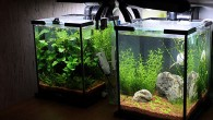 Они очень маленькие, — литров на пять, — но очень красивые. Вот пример того, что даже самые маленькие аквариумы способны очаровать любого человека. Но, […]