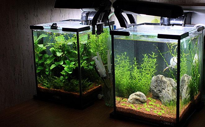 мини аквариумы