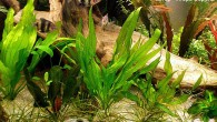 Летом нужно говорить исключительно о летних достопримечательностях. Одна из них — подводный сад Игоря Вороны из Полтавы. Этот садик постоянно меняется, но перемены лишь […]