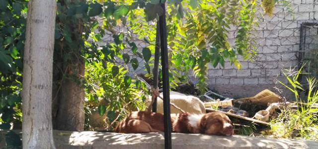 Не будите спящую собаку. Я, проходя мимо этого пса, не рискнул его беспокоить. Впрочем, пёс приоткрыл один глаз, лениво взглянул на меня, зевнул, и […]