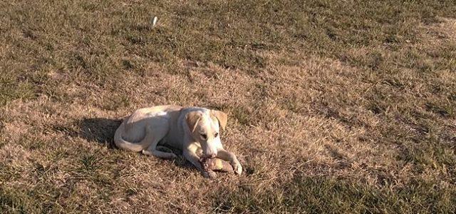 Наступивший 2018 год — год собаки. Поэтому все собаки весь этот год должны быть довольны жизнью, как эта собачка из Хивы. Какая же вкусная […]