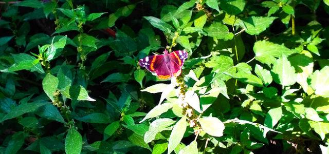 Попробуем найти «цветок» в зеленых зарослях? Очень просто: такую красоту заметить невозможно!